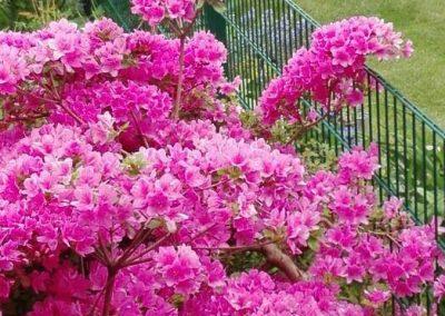 Blütenpracht 2  (Foto: A. Jandke)