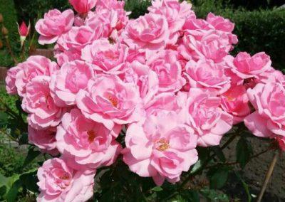 Blütenpracht 1  (Foto: A. Jandke)